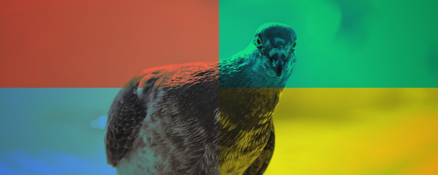Quid de Google Pigeon?